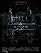 依然是玫瑰